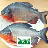 Ikan Bawal Segar