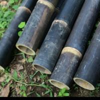 Bambu Wulung/Bambu Hitam Besar Ukuran 50 cm