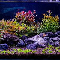 paket stemplant co2 ( tanaman aquascape )