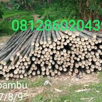 Bambu steger uk 7/8/panjang6,3cm