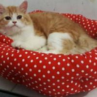 Kasur Anjing/Kucing Pet Bed 40 cm extra Bantal Mainan