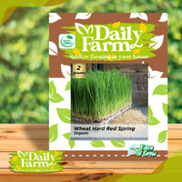 DF benih WHEAT HARD RED SPRING rumput gandum microgreens daily farm