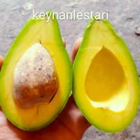 Alpukat Mentega Super premium 1 kg-avocado hight quality