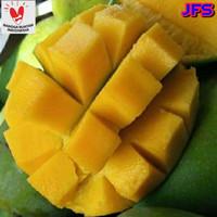 MANGGA HARUM MANIS per kilo / buah mangga