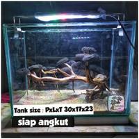 aquarium aquascape full set mr rizky wijaya