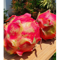 Buah Naga Merah 500gr (happy harvest)