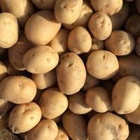 Kentang Rendang/Kentang Kecil/Baby Potato