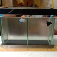 akuarium mini kaca 20x10x15 buat cupang 2 sket