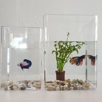 Akuarium Aquarium toples Cupang akrilik acrilyc