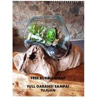 (M) Aquarium Ikan Cupang Hias Pot Tanaman Kaca Tiup Aquascape Mini