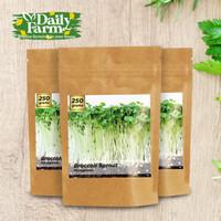 Benih Microgreens Broccoli Sprout - Bulk Size ( 50 Gram - 500 Gram ) - 250 gram