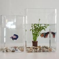 Toples Cupang Akrilik Aquarium Akuarium Cupang Acrylic 3 Liter/4 Liter