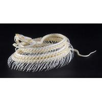Kerangka/Rangka hewan / awetan - Trimeresurus albolabris (coiled)