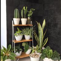 Rak Kaktus/Rak Bunga