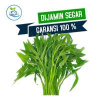 Kangkung sayuran segar sayur fresh Tangerang
