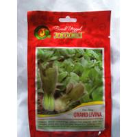 Benih Juwara Pak Choy Grand Livina