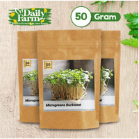 Benih Sayur Microgreens Buckweat (50 gram) - 50 grm