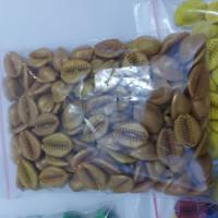 Biji Kerang Congklak Dakon 105 pcs Plastik 2 cm