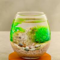 Aquarium mini akuarium cupang guppy bulat kaca