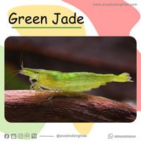 Green Jade - Fatih Store - aquascape