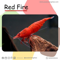Red Fire - Fatih Store