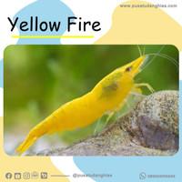 Yellow Fire - Fatih Store - aquascape