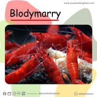 Blodymarry - Fatih Store - aquascape