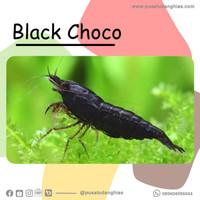Black Choco - Fatih Store - aquascape
