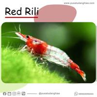 Red Rili - Fatih Store