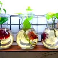 Aquarium Mini Ikan Cupang / Betta Fish Botol / Vas / Solitare Sekat Ka