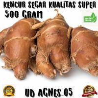 kencur segar kualitas super 500 gr