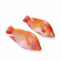 ikan nila merah segar premium1kg