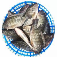 ikan mujair segar 1 kg fresh