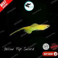 Ikan Hiasan Guppy - Yellow Top Sword - B
