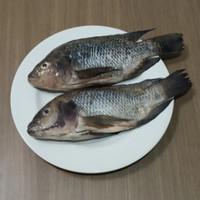 Ikan Mujaer Segar Fresh 1 kg