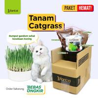 Paket Biji Rumput Gandum, Rumput Kucing, Benih Catgrass + Media + Pot
