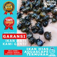 Keong Aquascape / Keong Hias Aquascape - MEFISH_ID - KEONG TANDUK