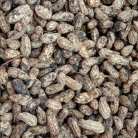kacang tanah mentah - Kacang kulit Segar Fresh
