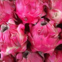 buah naga merah 1kg segar