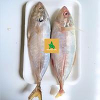 ikan kembung fresh segar