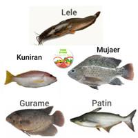 PASAR GUBENG - Ikan segar Mujaer/lele/gurami/patin/kuniran