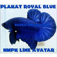 Ikan Cupang Plakat Royal Blue Line Avatar Gordon Male