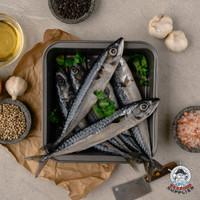 Ikan Salem Jepang / Ikan Makarel Jepang / Mackerel / Ikan Salem Segar
