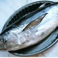 Baby tuna /ikan tongkol segar per pack berat -+500gram