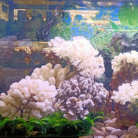 batu karang laut asli aquarium hiasan Aquascape