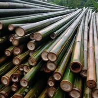 bambu steger crukcuk 8/10/6mtr