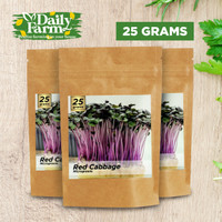 Benih Microgreens Red Cabbage sprout - Bulk Size 25 Gram