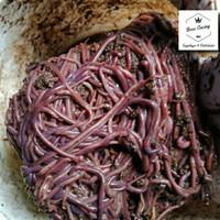 cacing tanah anc | cacing merah hidup 1 kg
