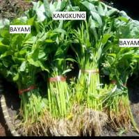 Sayur Kangkung dan Bayam Fresh Super Berkualitas