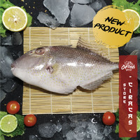 Ikan Ayam - Ayam Segar / Ikan Laut Segar Kiloan 3 pcs/kg - WGGS, 1-3 Ekor 800 gr